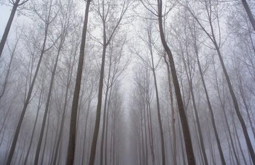 p9_namiko_kitaura_landscape_ii_yatzer